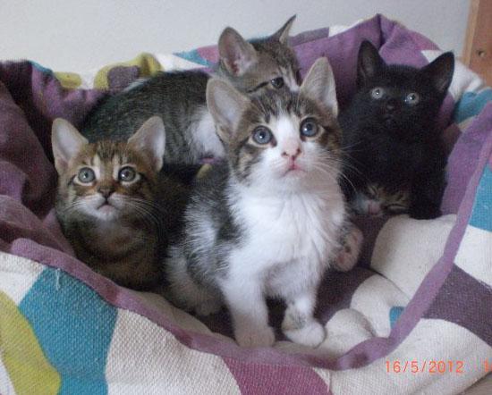 Historias de gatitos que puedo leer